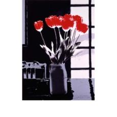 tulip-a